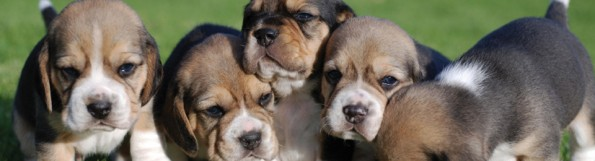 General-Image-Puppy-Group-Copy