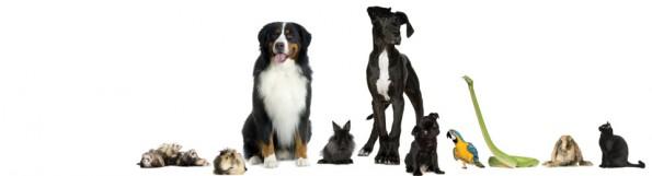 General Image - Various Animals